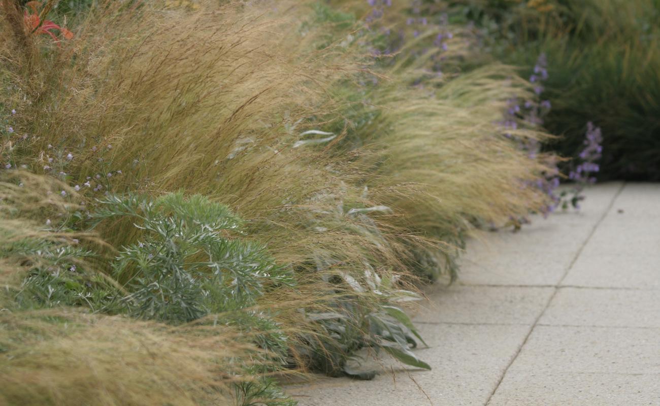 Amanda Patton Hampton Court modern garden design 2