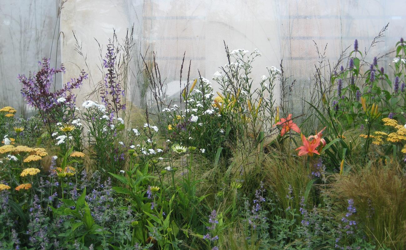 Amanda Patton Hampton Court modern garden design 4