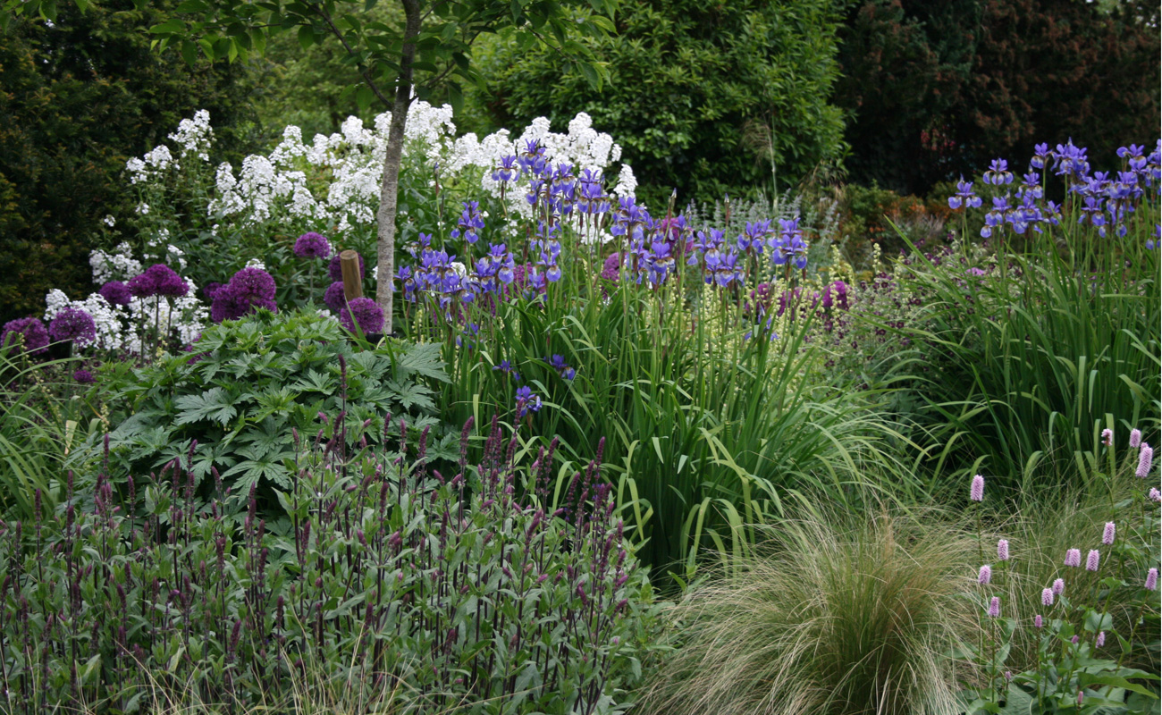 Walled garden amanda patton for Structural plants for small gardens