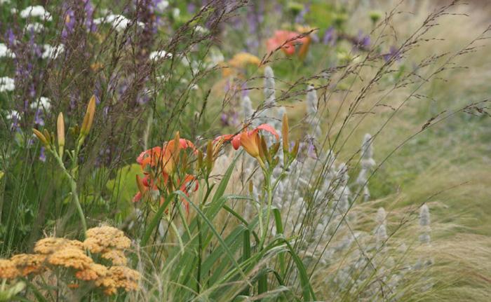 Amanda-Patton-award-winning-Planting-Design-1