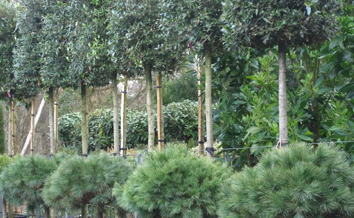Architectural-Plants-Sussex-planting-design-1