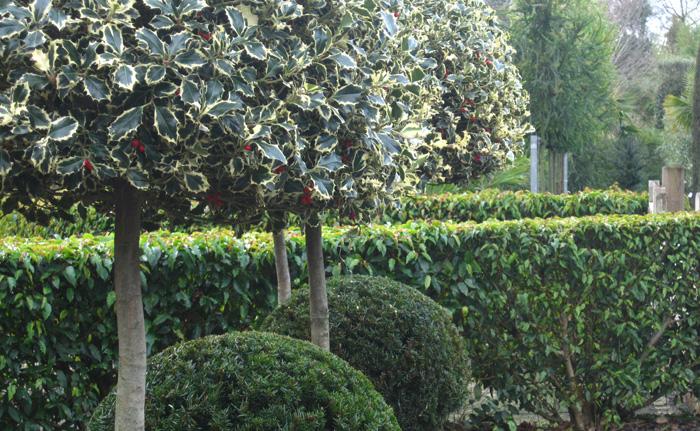 Architectural-Plants-Sussex-planting-design-2