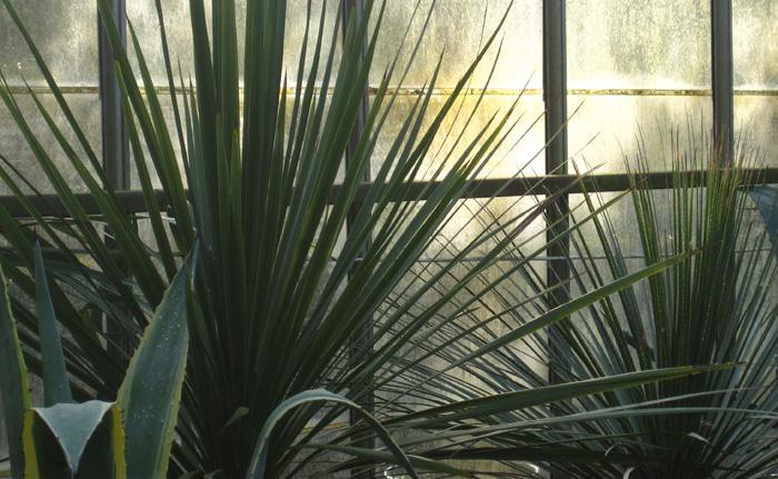 Architectural-Plants-Sussex-planting-design-4