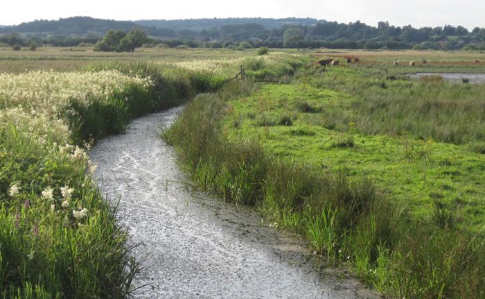 Pulborough-Broooks-landscape-design-Amanda-Patton-2