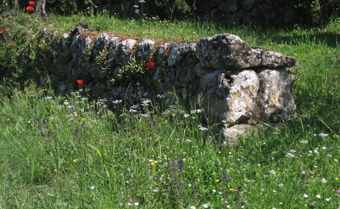 Tuscan gardens tour Amanda Patton (15)
